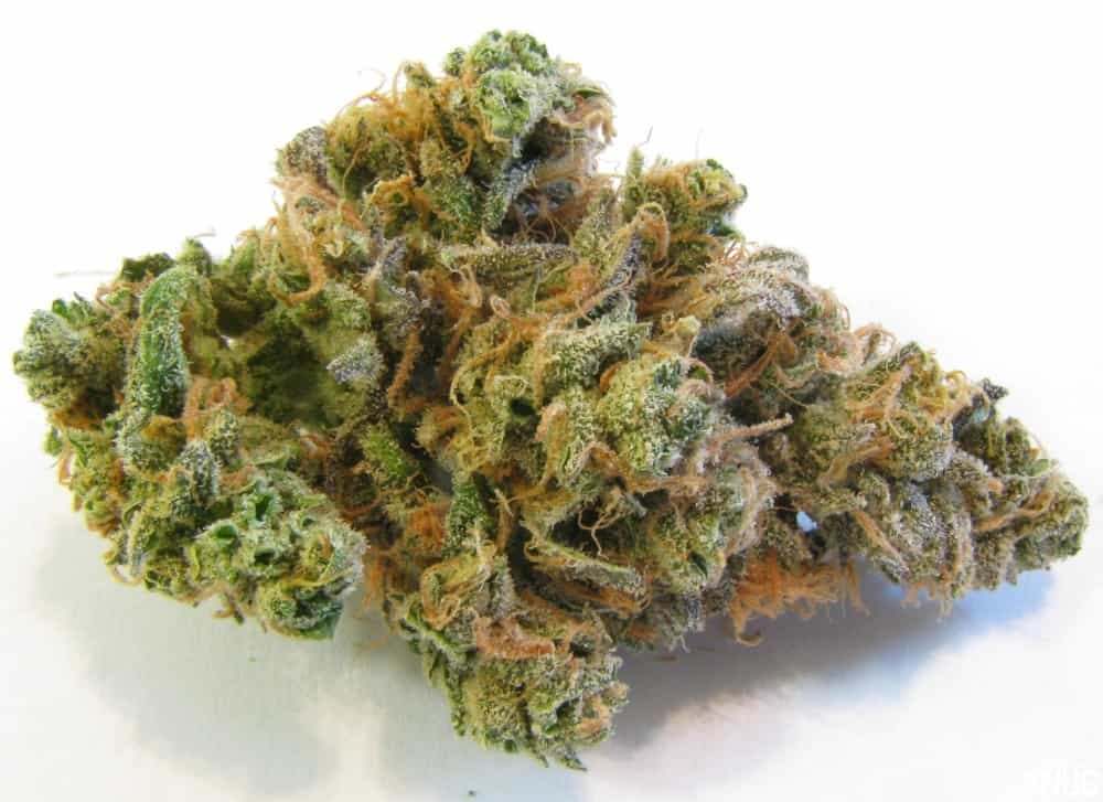 Blue Dream Cannabis Strain