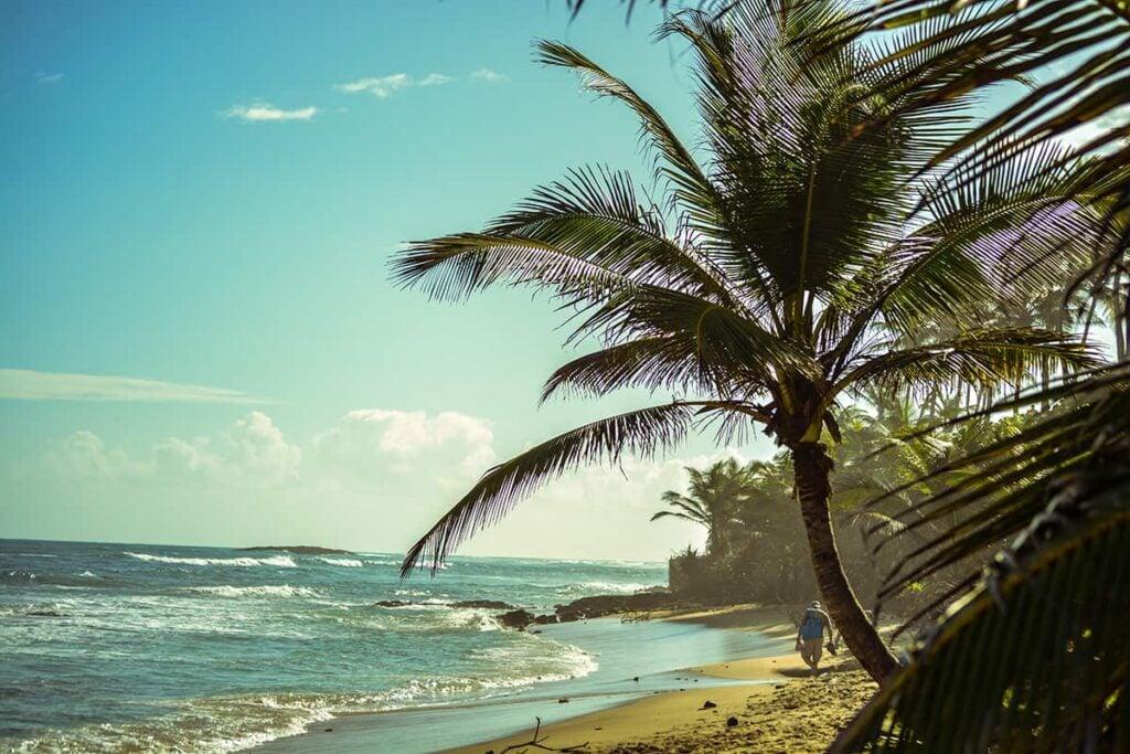 Where to Buy CBD Flower in Puerto Rico